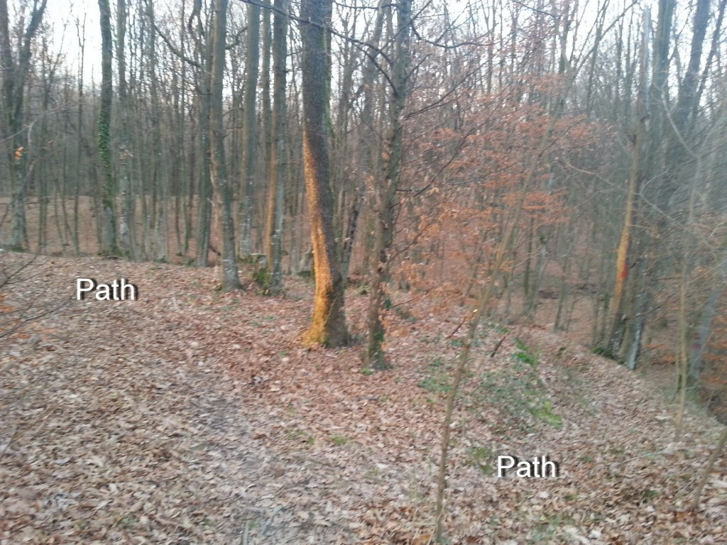 I kneed ideas for my new trail PLEASE help!!!-20131211_154034.jpg