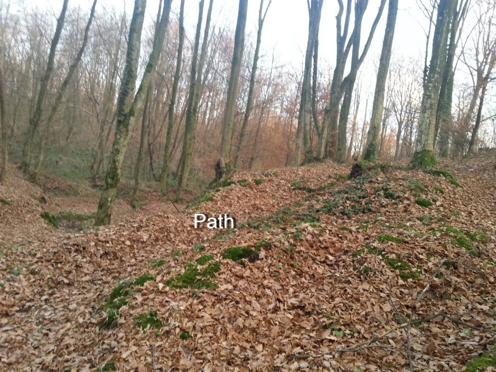 I kneed ideas for my new trail PLEASE help!!!-20131211_154121.jpg