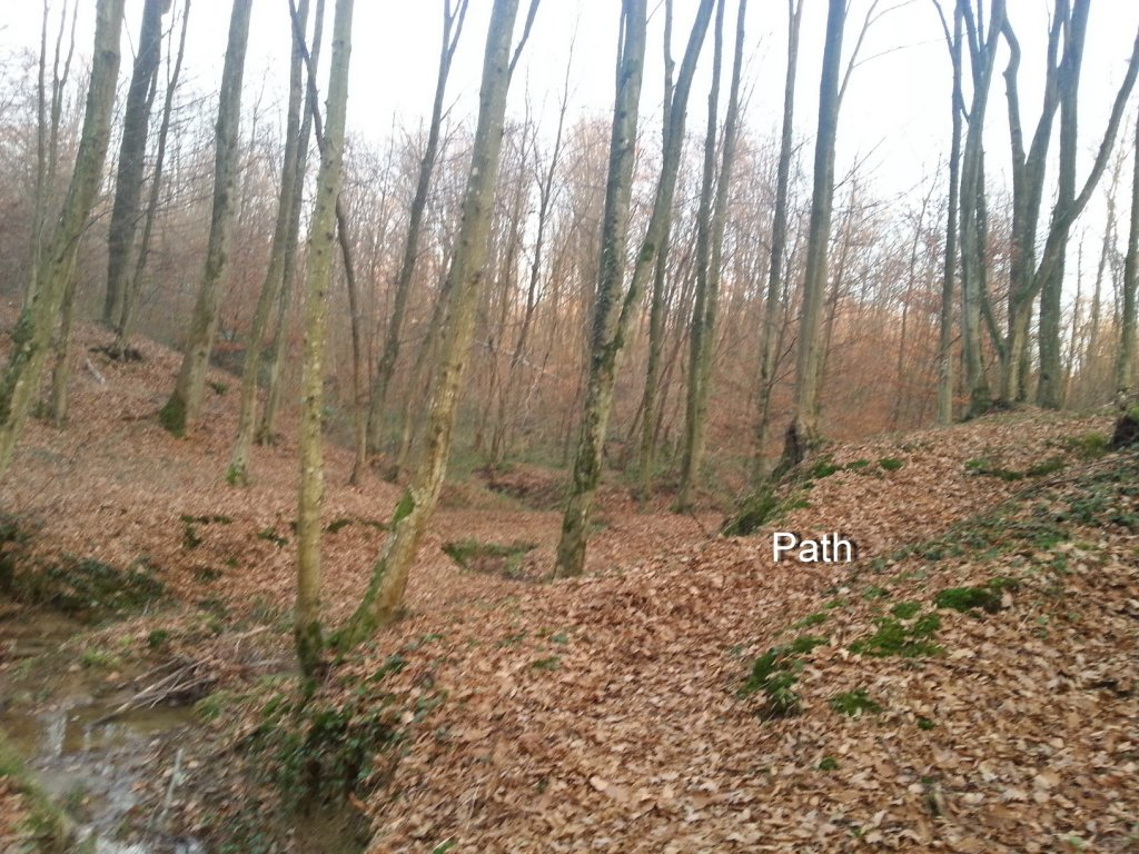 I kneed ideas for my new trail PLEASE help!!!-20131211_154139.jpg