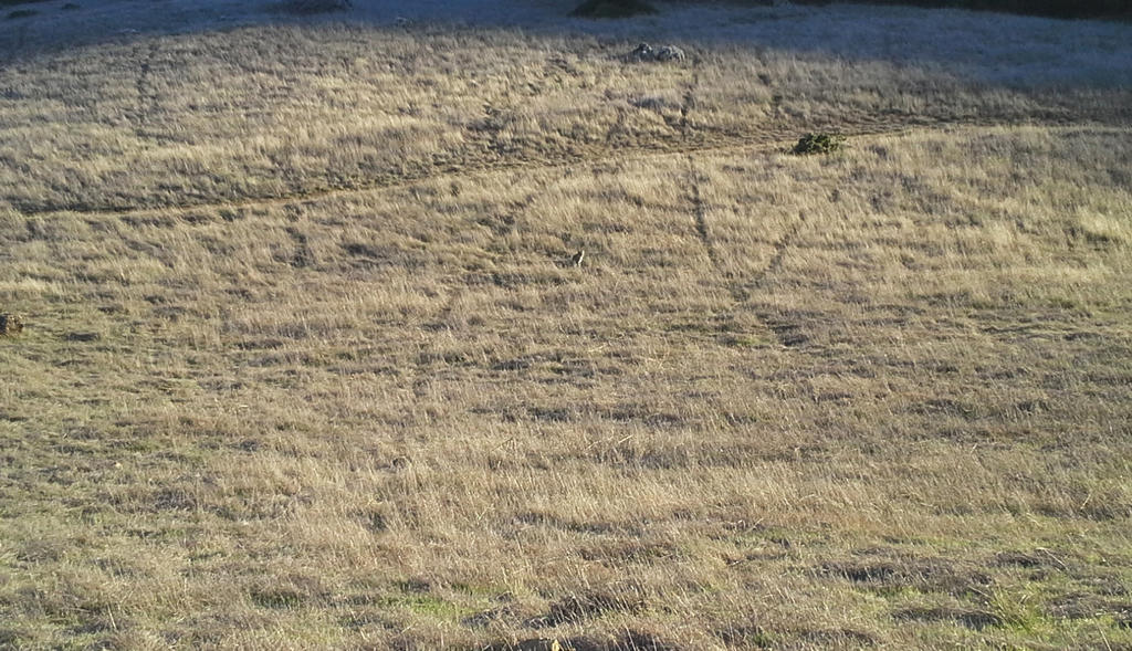 Mountain Lions: Who's seen one?-20131214_152417.jpg