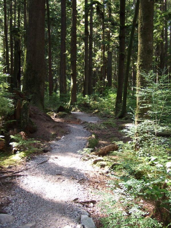 novice and kid friendly trails?-2013_0713new0004.jpg