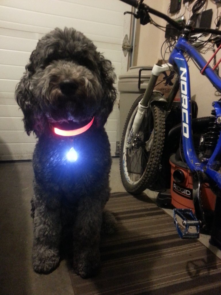 Dog collar LED-20140209_230239.jpg