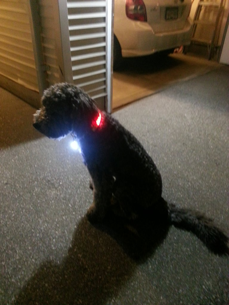 Dog collar LED-20140209_231216.jpg