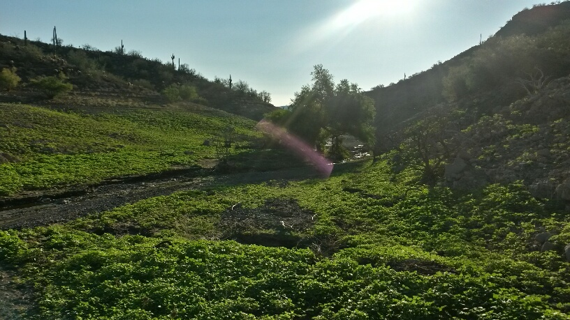 New Trails at Lake Pleasant?-20140814_070936_richtone-hdr-_resized.jpg