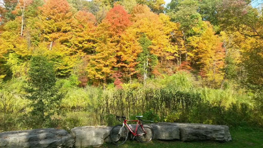 Cross Bikes on Singletrack - Post Your Photos-20141016_144611_richtonehdr.jpg