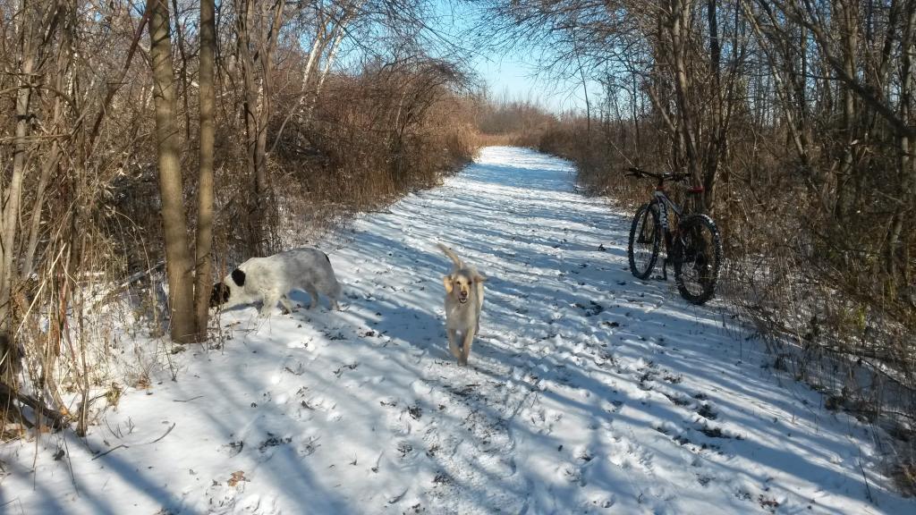 Totally Unofficial Snow Biking 2014/15 Thread-20141121_111354.jpg