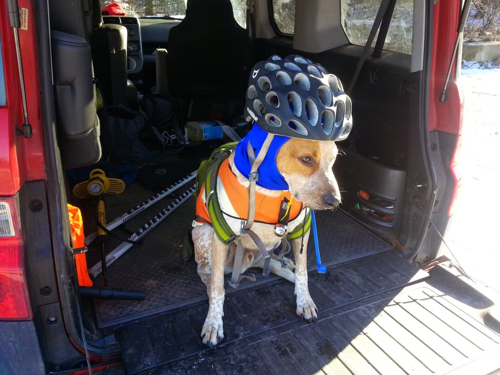 Post your dog with your single speed-20141212_101333.jpg