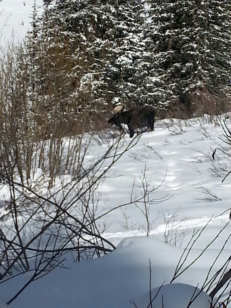 Wildlife you have seen on trail...post your pics...-20141215_124838.jpg