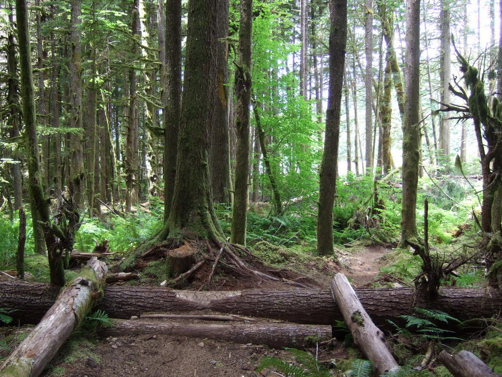 Scenic XC trails near Vancouver/Squamish - early October-2014_0622new0080.jpg