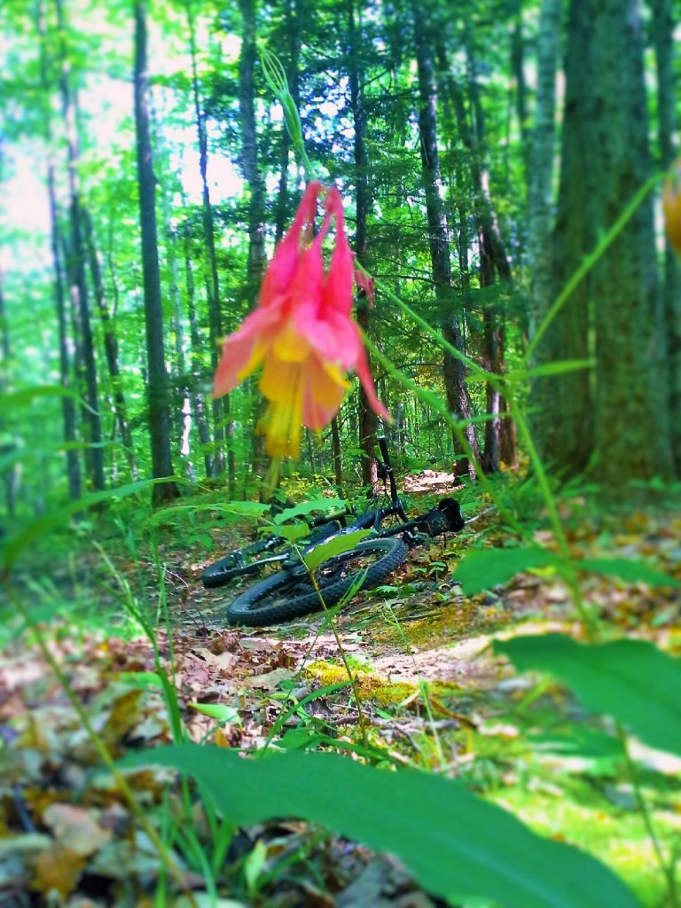 MA Trails Picture Thread-20150525_162512.jpg