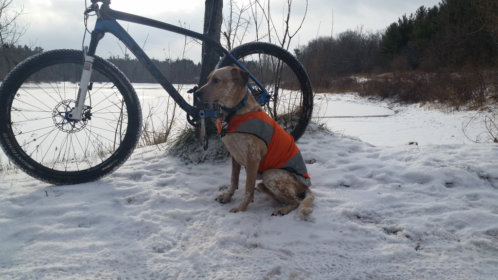 Post your dog with your single speed-20160101_095039.jpg