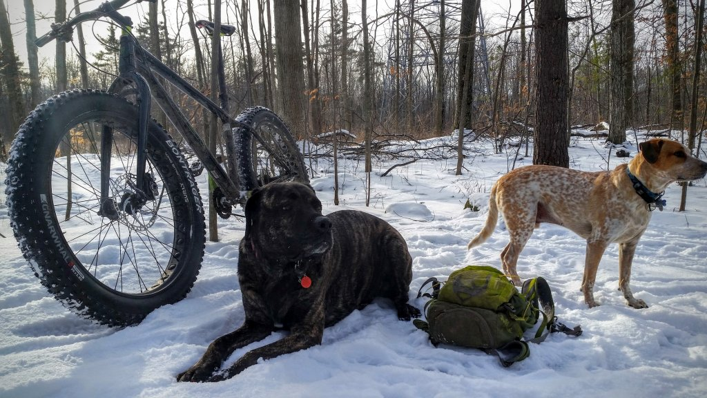 Post your dog with your single speed-20160122_094735-1-.jpg