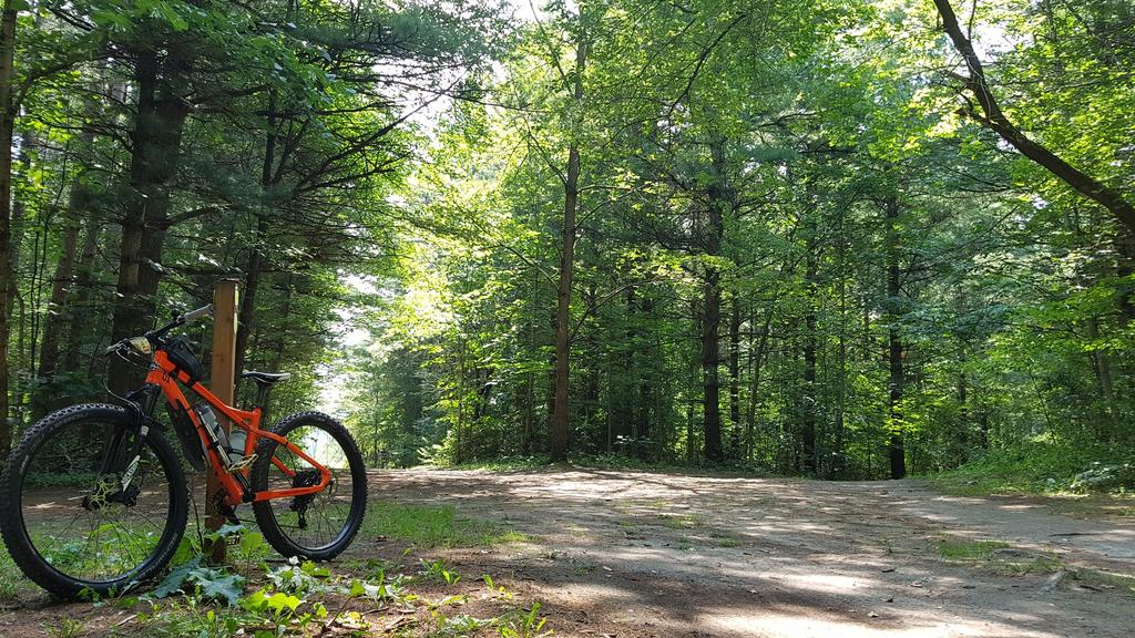 "RSD Bikes ""The Mayor""-2017-08-20-11.40.52.jpg"