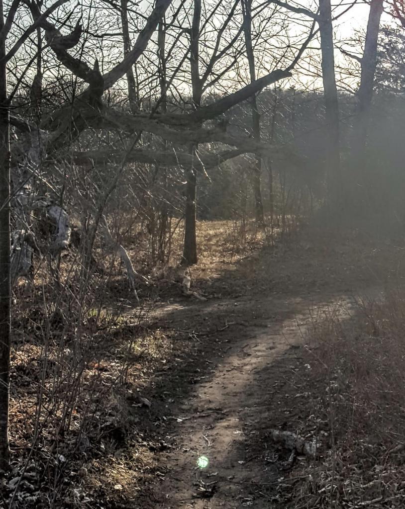 Bronte Creek North Trail (Burlington, ON)- Game On!-20170414_185615.jpg