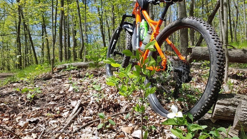 "RSD Bikes ""The Mayor""-2018-05-17-13.32.23.jpg"