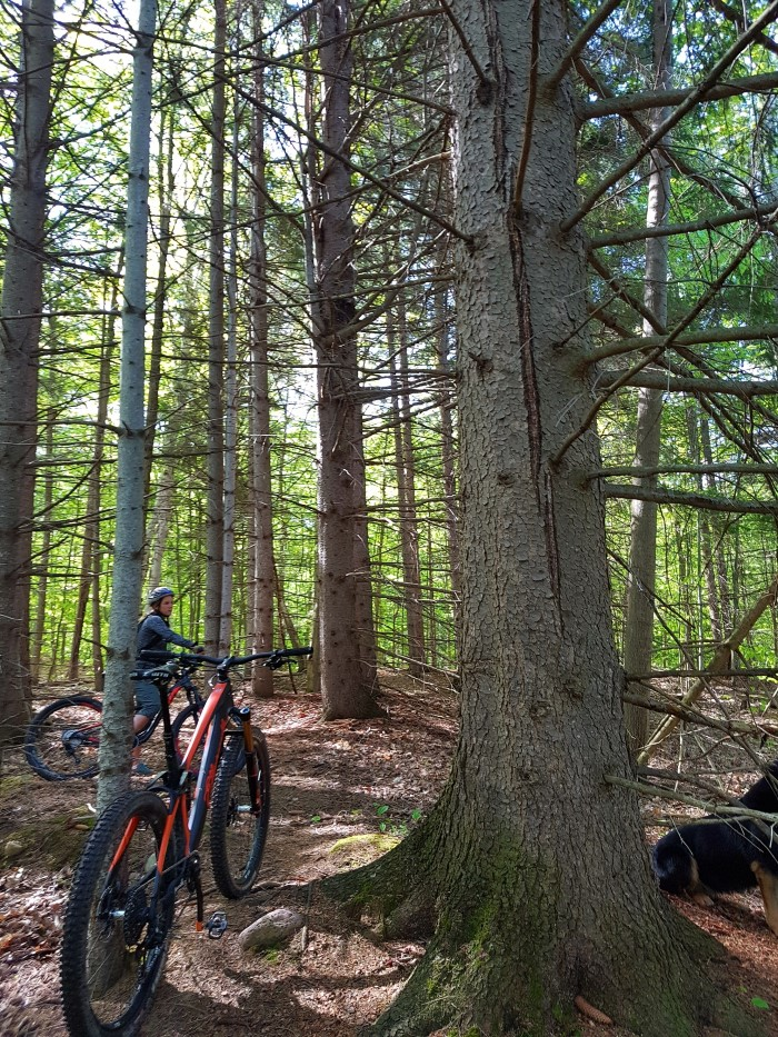 Local Trail Rides-20180521_093748_resized_custom_1.jpg