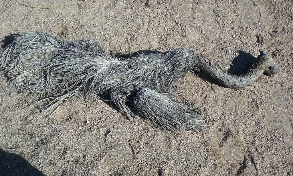 Emu remains found at Brown's Ranch-20180624_081849.jpg
