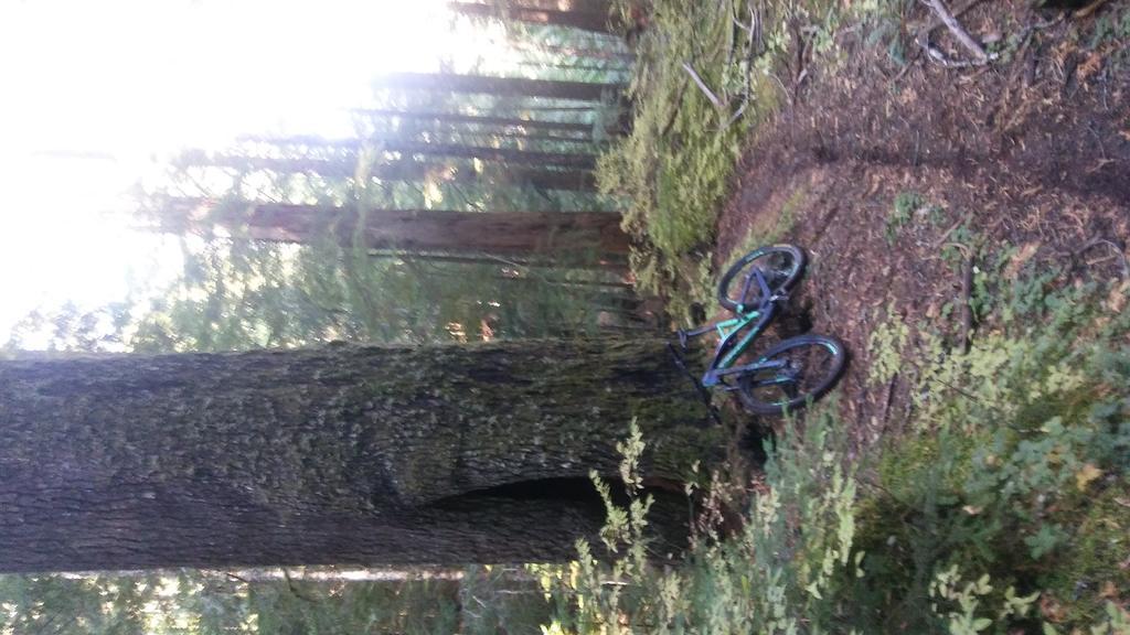 Trans Cascadia-20181013_134513.jpg