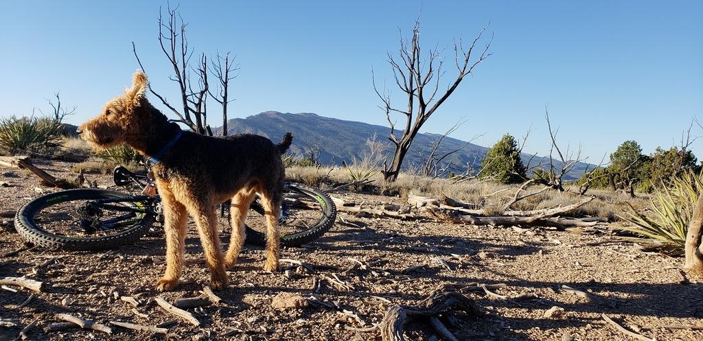 Trail Dogs...-20181105_155952%5B1%5D.jpg