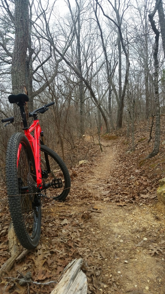 did you ride today?-2019-02-03-19.27.49.jpg