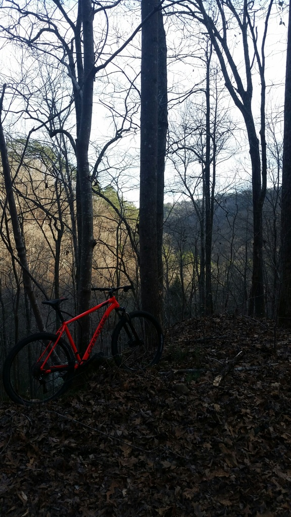 did you ride today?-2019-02-08-18.33.51.jpg