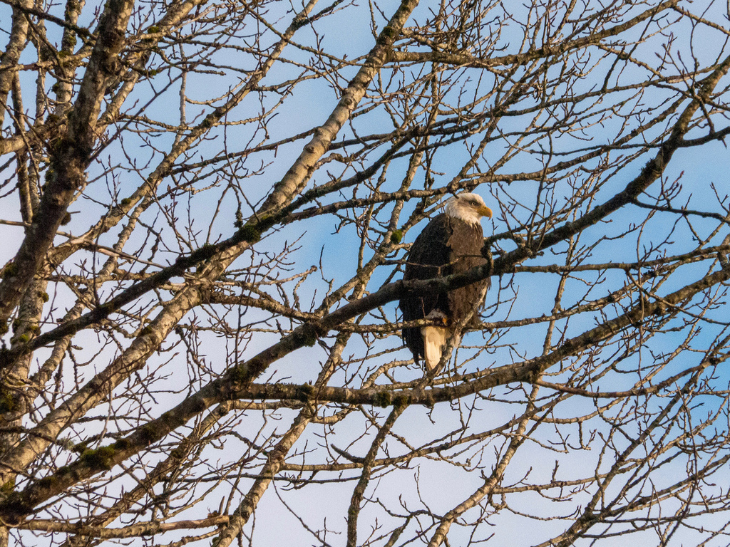 did you ride today?-2019-12-14-eagles-jeff-fil-bill-18.jpg