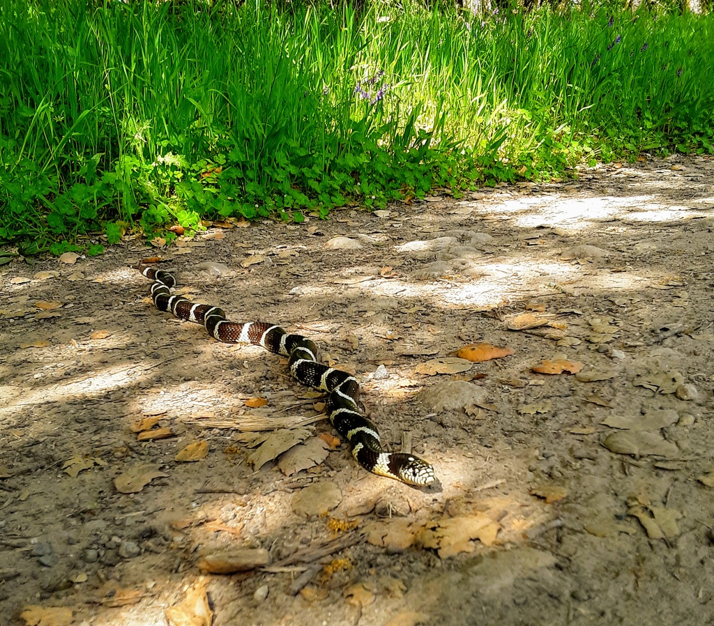 Photo Assignment: snakes on the trail-20190428_152035.jpg