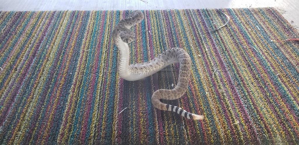 Reptile Encounters: 2019-20190514_182422.jpg