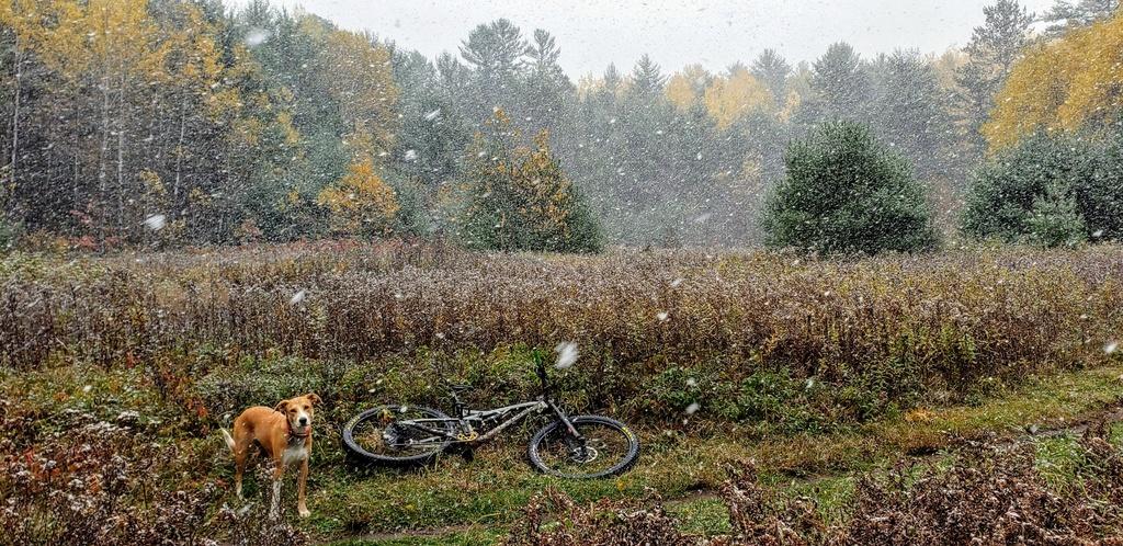 Grippy (Wet Riding) 29er Trail Tires??-20191012_132114.jpg