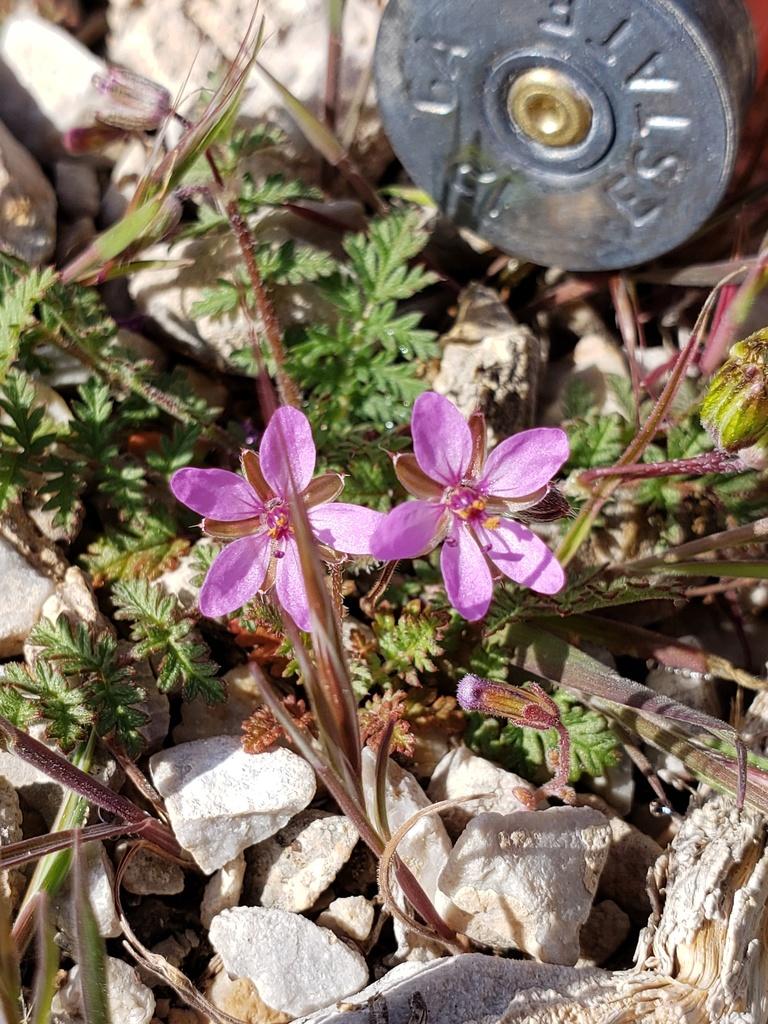 Botany Thread-20200321_094556.jpg