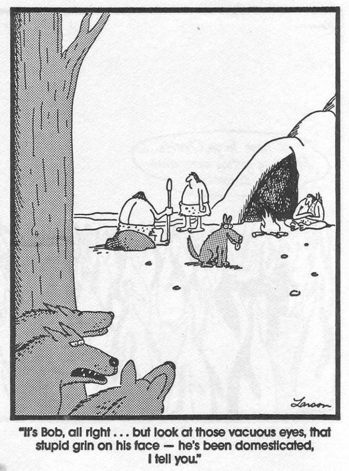 The strange behavior of dogs...-20882406_303126370151806_5575942613774828421_n.jpg
