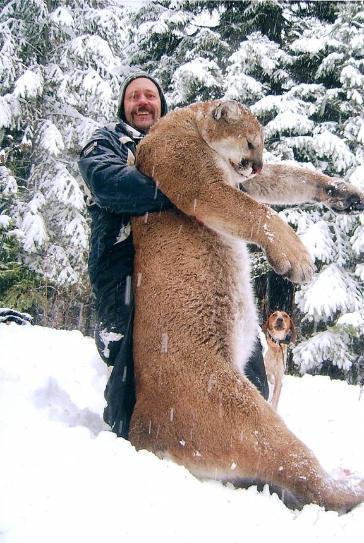 Do cougars attack large, moving objects like us?-21318traildailytimesholdcougar.jpg