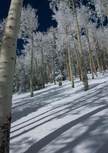 2013/2014 Snow Stoke Thread-2279_1020978608434_5720_n.jpg