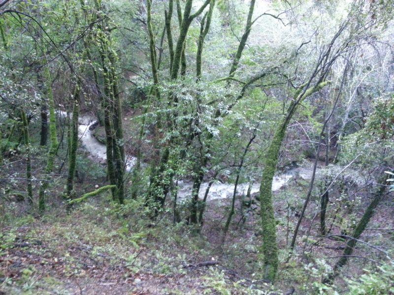 Landslide completely closes Los Gatos Lake Ranch Trail Sanborn Park 8am 1/12/2017-22auuf.jpg