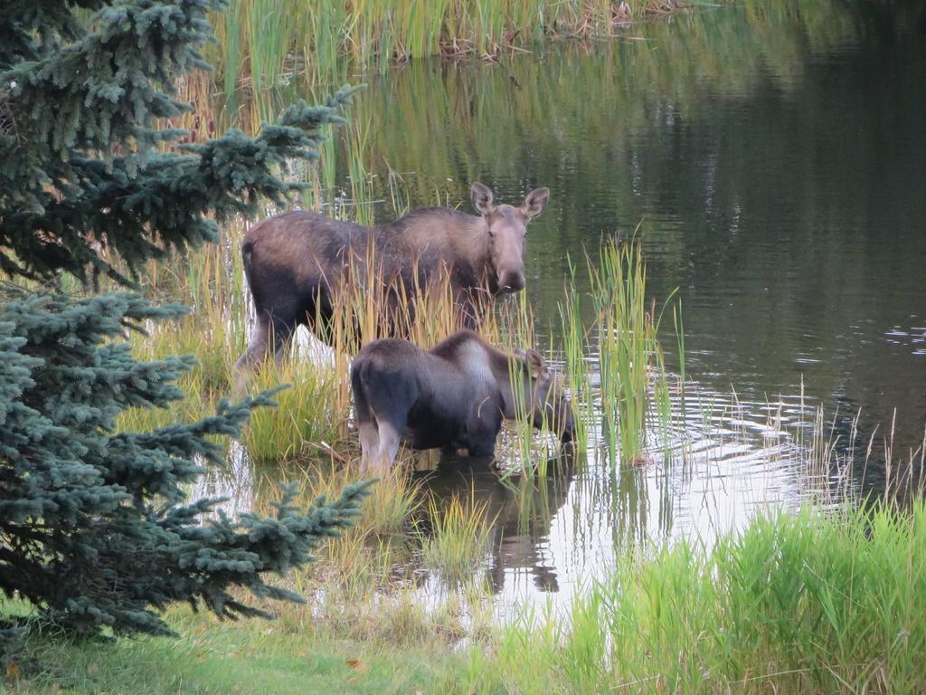 Visiting Anchorage in December-26116027_1917681948245530_6962417131862668932_o.jpg
