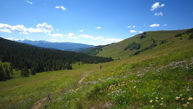 Colorado TR-2elk1.jpg