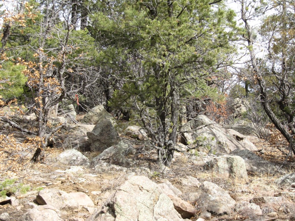 Three Bottle Technical trail  extension and work on existing trail feedback.-3-bs-scouting-lines-011.jpg