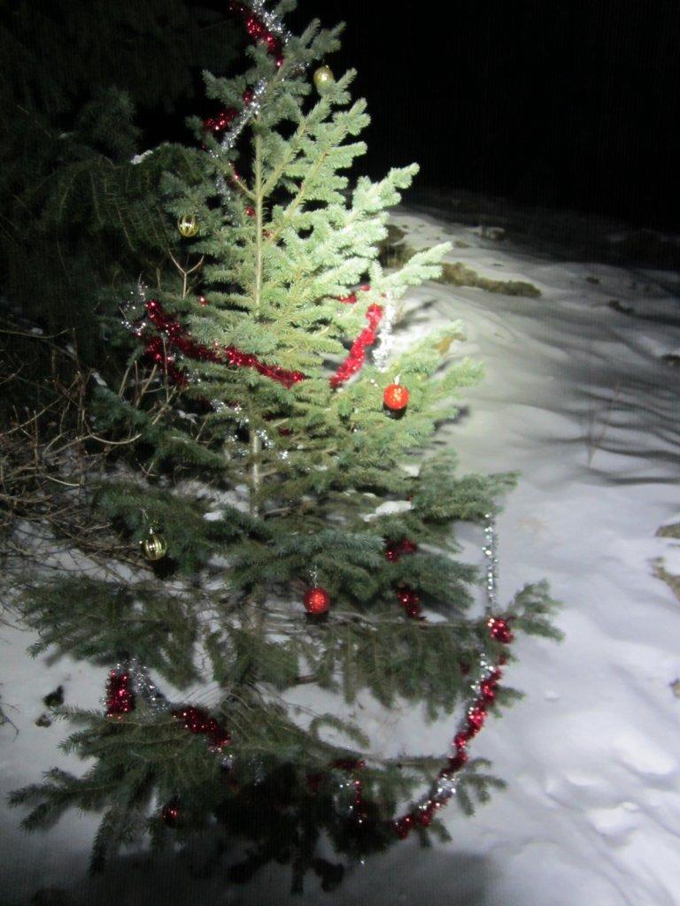 2014 Beerd Belly Ride!!! Jan. 1-3-sisies-christmas-tree.jpg
