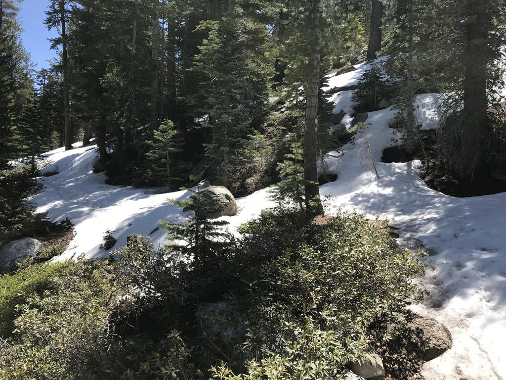 Tahoe Trails and Shuttles Status-31891082_2045656235507236_5347283757248282624_o-1-.jpg