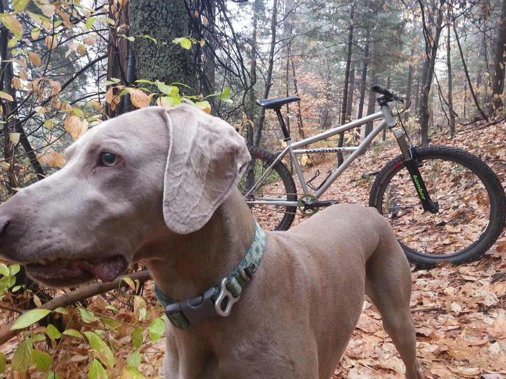 Post your dog with your single speed-348.jpg