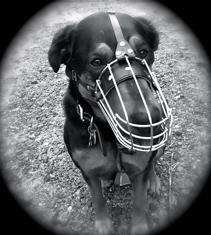 Dog training-377796_2944197571670_1463163735_32945528_770579594_n.jpg