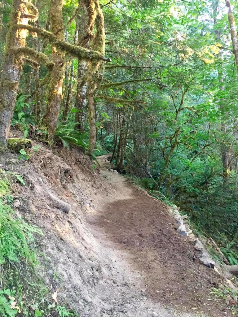 Logs to shore up bench cut on steep slopes a durable solution?-38036471_10216628048522816_6310759760576643072_o.jpg