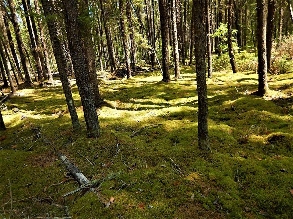 Local Trail Rides-38708082_2183135668597539_2805286365015572480_n.jpg