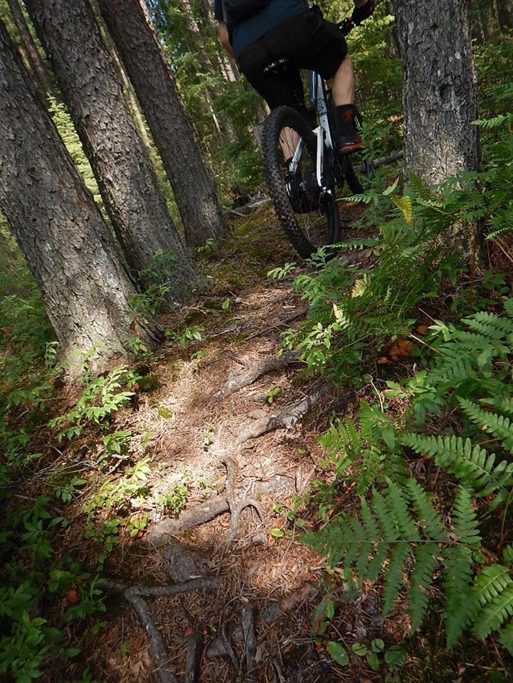 Local Trail Rides-38753026_2183138775263895_8794918735199600640_n.jpg