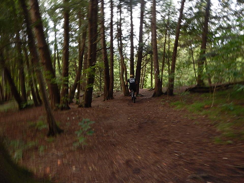 Local Trail Rides-39442849_2195821993995573_8249290831559655424_n.jpg