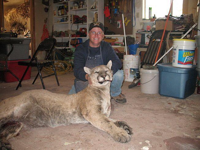 Mountain Lion...-397241_326723797361203_100000707553969_1082458_2029141978_n.jpg