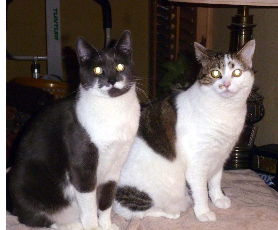 Cat Passion (here kittie, kittie, my new best friend...) Post your cat photos.-406368_2900971415414_1594309515_2514124_1591356568_n.jpg