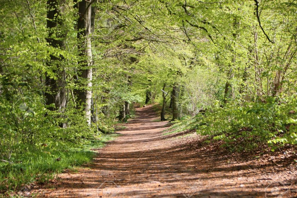 Middle Black-41548497-scenic-small-forest-dirt-path-spring-fresh-green-trees-stock-photo.jpg