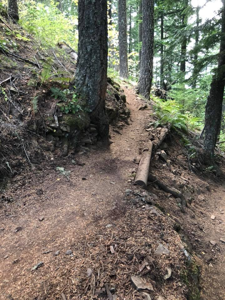 Logs to shore up bench cut on steep slopes a durable solution?-41815174_10210276395141337_7794490276365467648_n.jpg