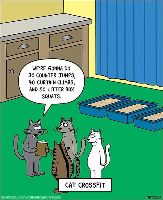 O.C. Official Daily Chuckle thread.... Comic Strip Enhanced...-42212333_2175688119333111_7458631384370774016_n.jpg